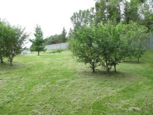 oakvale urban orchard in fruit