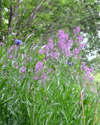 recent photo of what's growing: wild flowers